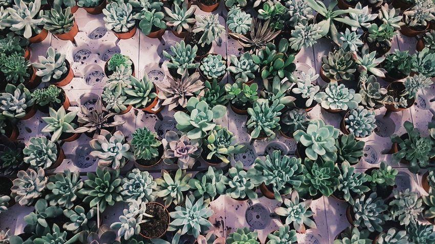 Plant Nature Backgrounds Pastel Succulent Texture Flower Shop Decor Green Purple Lilac Perspectives On Nature