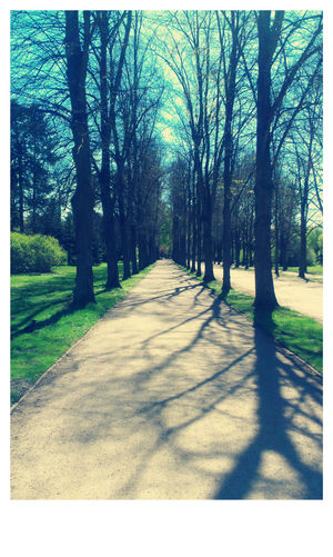 Nature is a much better friend. Nature Tree Path Pathway Sun Spring Shadow Tree Shadow Potsdam Sanssoucipark Germany HTC Photoshopexpress