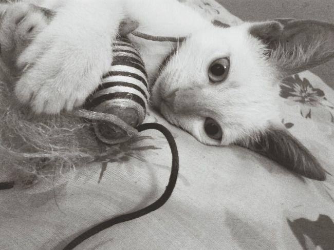 My cat Branquinha