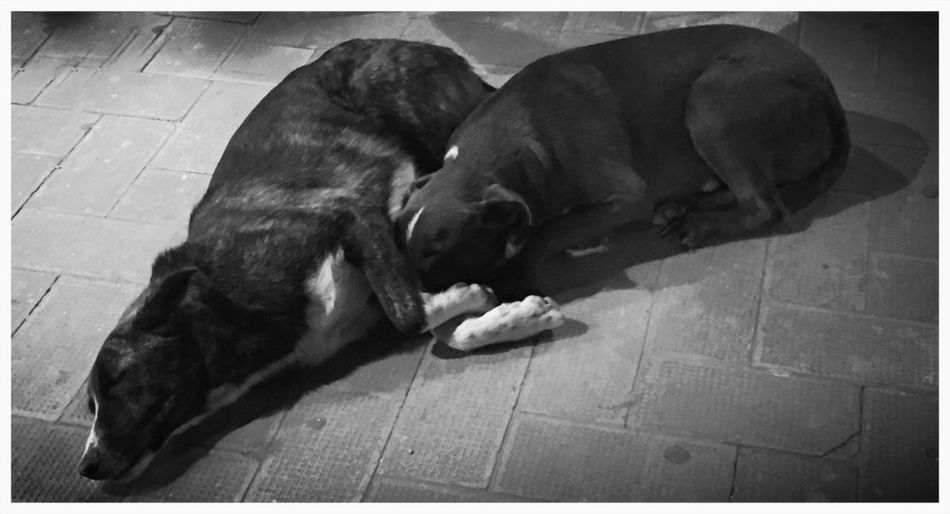 Dogs Strays Black And White Home Is Where The Art Is Two Is Better Than One Monochrome Photography