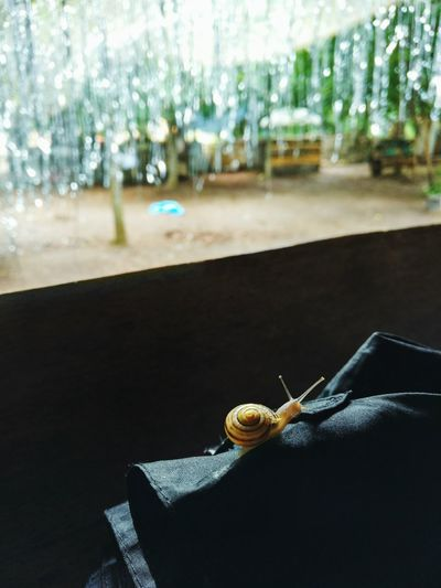 No People Indoors  Day Close-up Snail After Party After Partying Rave Outdoor Party Dj Electronic Music Animal Glitter Bonanza Openair Dance Investing In Quality Of Life EyeEmNewHere The Week On EyeEm Perspectives On Nature