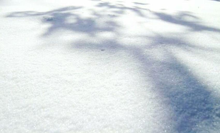 Snow shadow Snow Tree Shadow