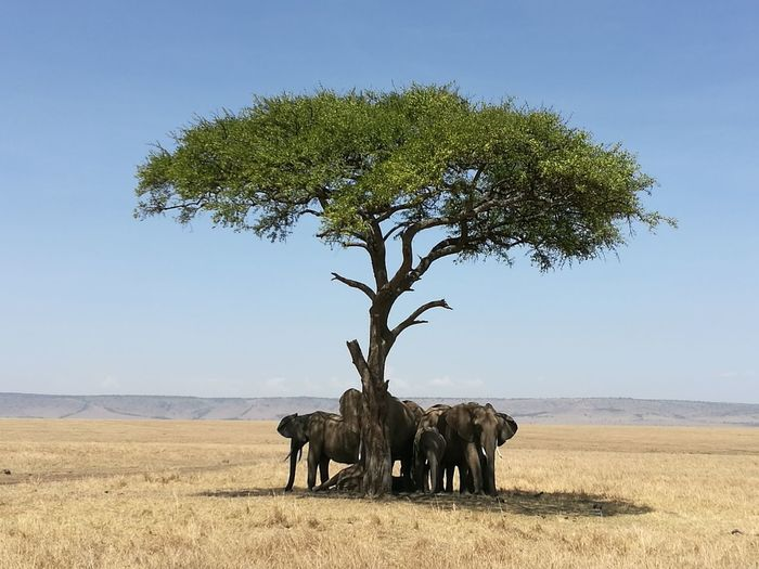 Elephants Under A Tree In A Sunny Day