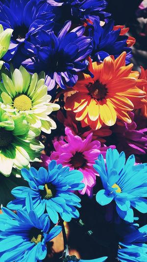 To ColorFul you day. Alway AddColors ToYourDay So Your Day Can Be More Bright