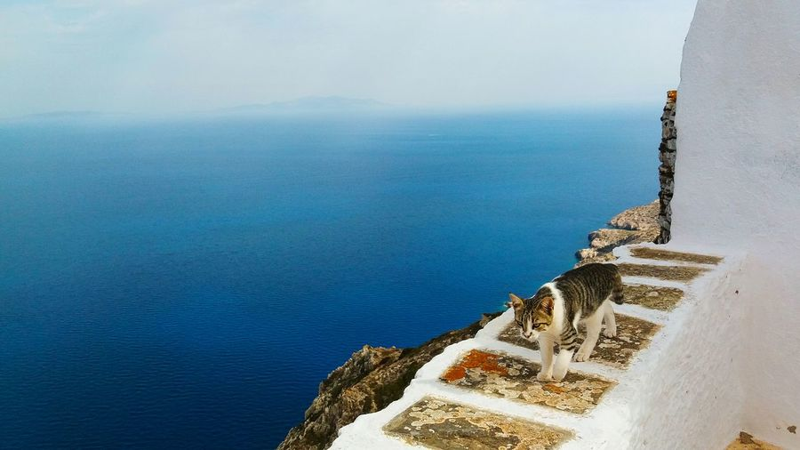 Greek Cat Blue Sky Photography Cats Of EyeEm Catoftheday Cat♡ Greekcats Cat Blue Bluewater Greece Sikinos Cyclades White Landscape Sea Day Nature Tranquility Outdoors No People Sky Horizon Over Water Scenics Beauty In Nature Groyne