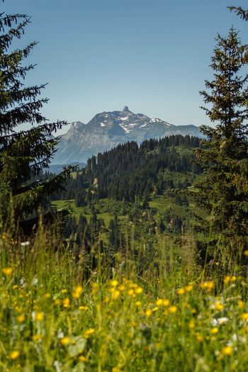 Tree Mountain Nature Growth Forest Landscape Beauty In Nature Scenics Mountain Range Plant No People Tranquility Clear Sky Outdoors Day Flower Sky Alps France Les Gets Morzine