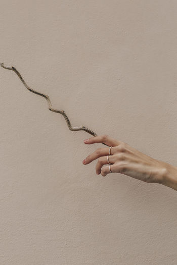 Cropped hand of woman holding plant by wall