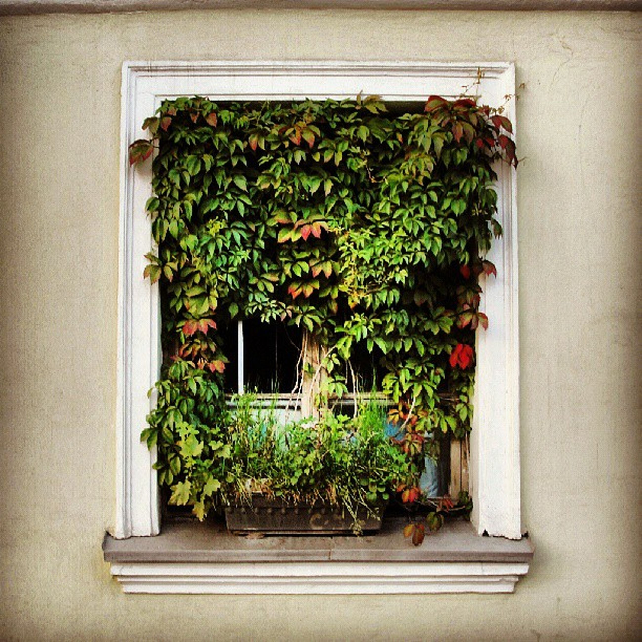 potted plant, plant, growth, green color, house, built structure, window, leaf, architecture, flower pot, building exterior, freshness, nature, pot plant, green, no people, indoors, flower, day, growing