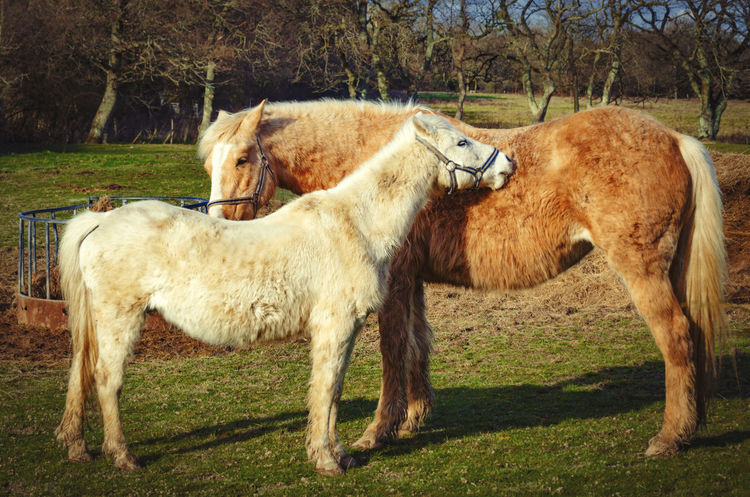 Natural Beauty Animal Love Animal Themes British Caring Couple Day Domestic Animals Field Full Length Grass Horse Livestock Love Mammal Mare Mothering Mum And Child Nature Nature No People Outdoors Standing Tree Two Horses Wildlife