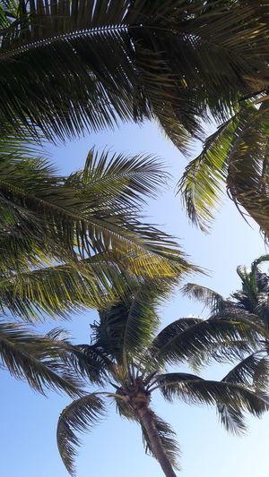 Beach Sunny Palm
