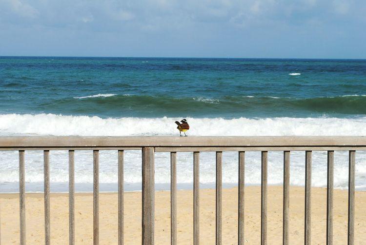 Bird Beach Sand