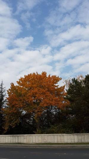 ümitlerim kırıldı bitti... hayallerim yıkıldı gitti... Nature_collection Autumn Colors Ineedamiracle Lostsouls