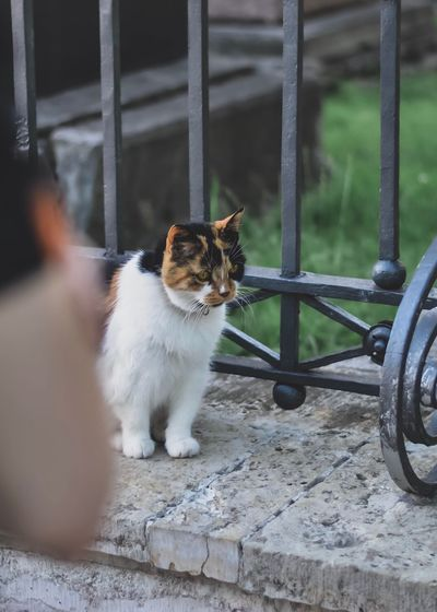 Cat sitting on metal structure
