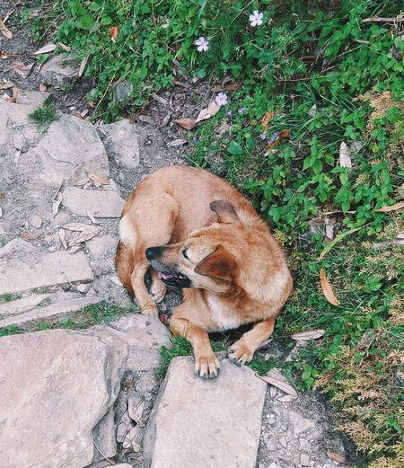 High angle view of a dog on rock