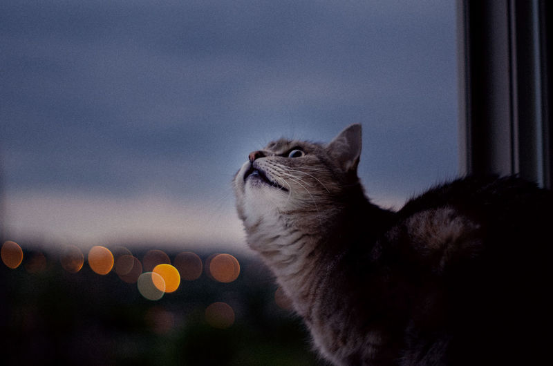 Close-up of a cat looking at window
