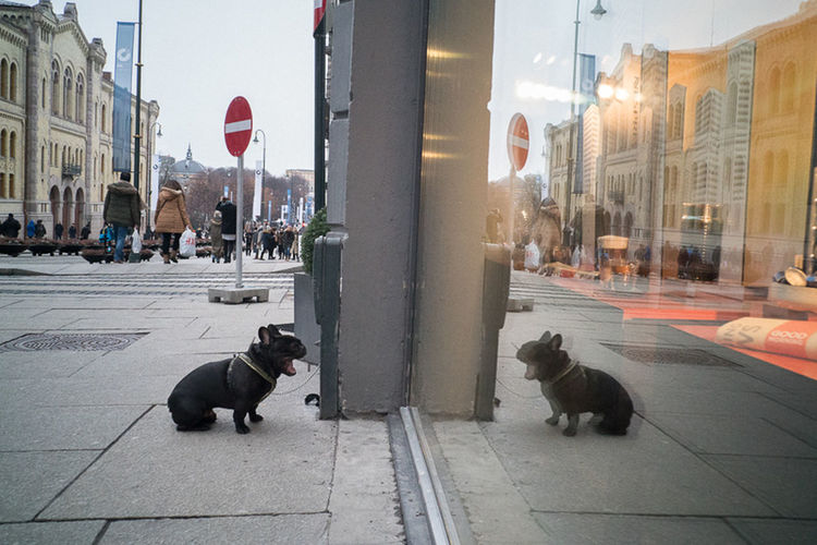 Oslo 2016 Animal Themes Architecture Building Exterior Built Structure City Day Dog Domestic Animals Domestic Cat Full Length Mammal No People One Animal Outdoors Pau Buscato Pets Sky Street
