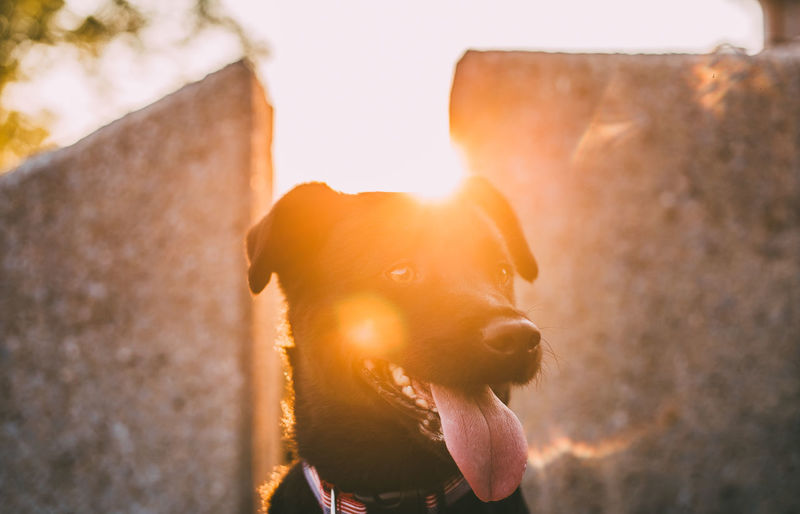 Sun bathing puppy. Also known as Ronan. Animal Themes Close-up Day Dog Domestic Animals Mammal Nature No People One Animal Outdoors Pets Photo Photography Portrait Sky Sunlight The Great Outdoors - 2018 EyeEm Awards The Traveler - 2018 EyeEm Awards