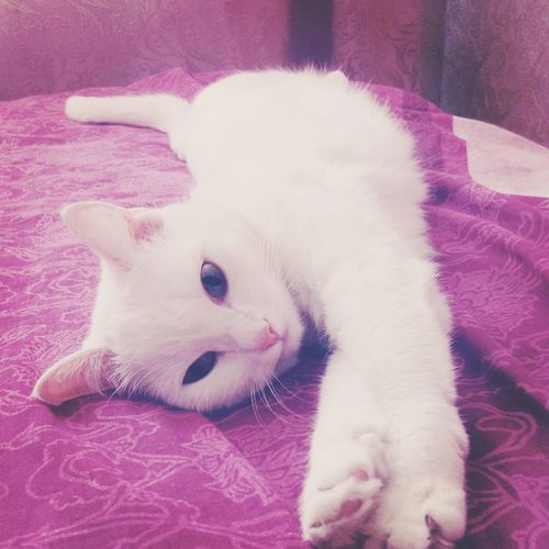My Cat White Cat Sleeping Cat Good Morning