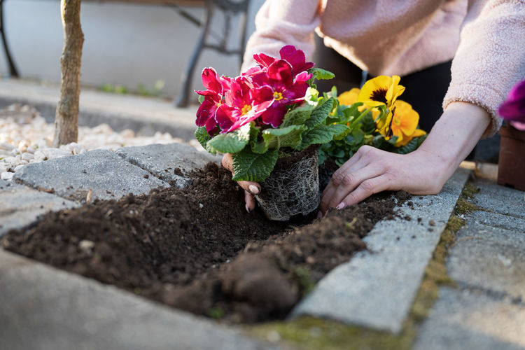 Midsection of person holding flower pot