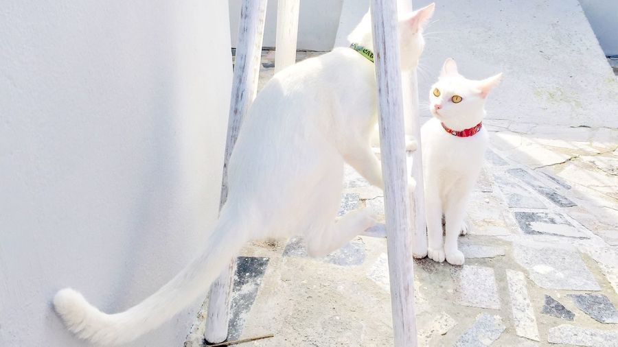 Close-up of white cats sitting by table on sidewalk