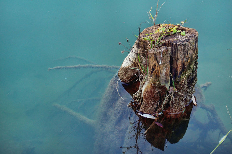 High angle view of tree in lake