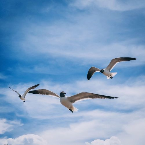 Birds of a feather Flying Bird Spread Wings Animals In The Wild Animal Themes Mid-air Animal Wildlife Black-headed Gull Low Angle View Sky Day Seagull Cloud - Sky Nature No People Outdoors Motion Togetherness Beauty In Nature Port Aransas Texas