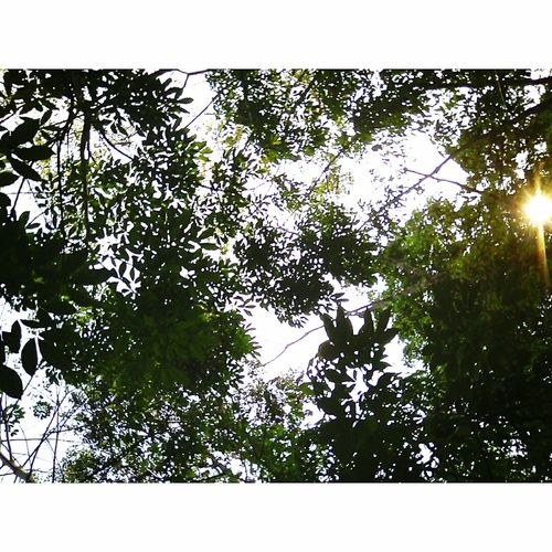 Rain Forest , Somewhere in a little village in Jambi, Indonesia