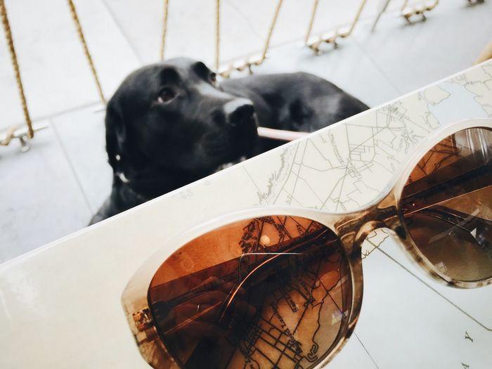 Snapshots Of Life Brunch Dog