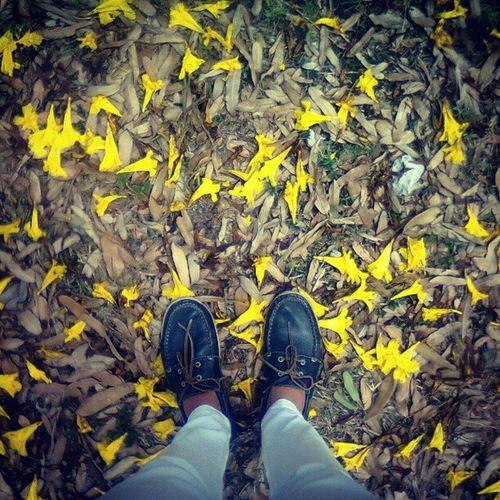 Outono Flores Jardim Sapato  brincandodefotografar