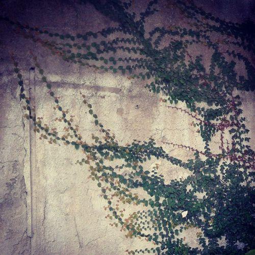 از خط کشی دیوار  برگ عبور می کرد؛ از حریم عشق ات دلم پیاپی در بازگشت Iran Anzali