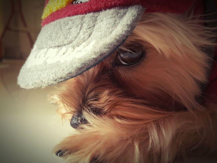 Ocha Hat Ball Cute Play Cap