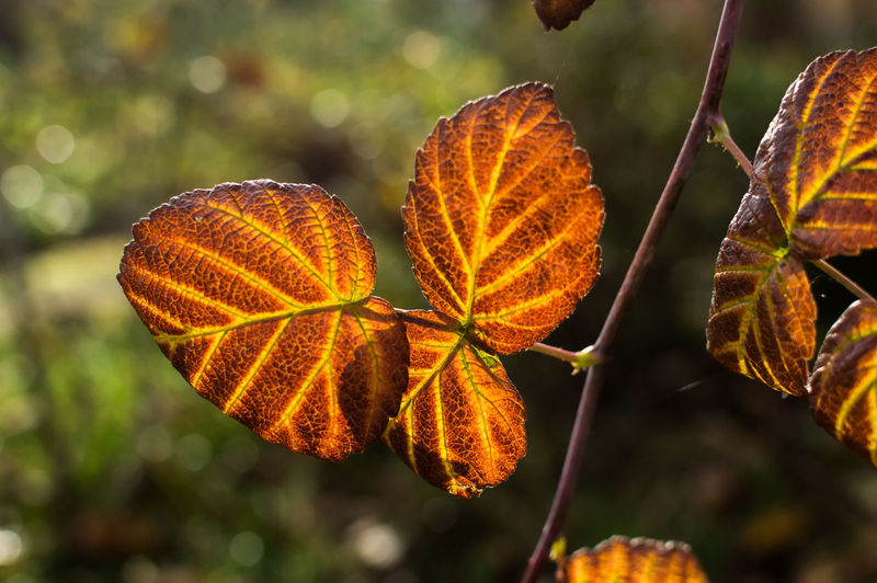 Autumn Autumn Colors Autumn Leaves Beaty Beatyfull Beauty In Nature Color Portrait Colorful Flower Flower Head Flowers Green Love Loving Life  Loving Nature Nature New Nice Orange Sellphotos Yellow Color