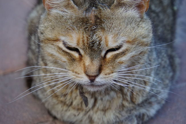 Chilling Cat In The Sun Whiskers Cat On Stone Floor Cat With Closed Eyes Close-up Of Cat Face Domestic Animals Domestic Cat Focus On Foreground No People One Animal Pets Sony A6000
