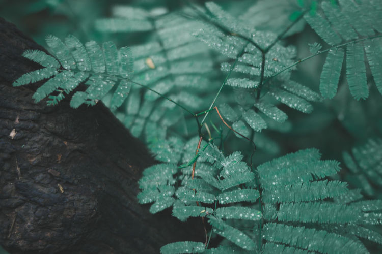 Green Color Plant Part Leaf Close-up Plant Nature Animals In The Wild Animal Wildlife No People Growth Day Focus On Foreground Tree Animal Drop Beauty In Nature One Animal Water Outdoors Leaves RainDrop