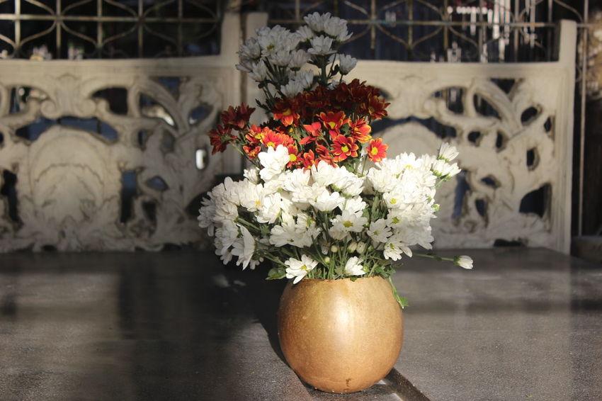 Arrangement Cultures Flower Flower Head Fragility Nature Ornate Ripe Variation
