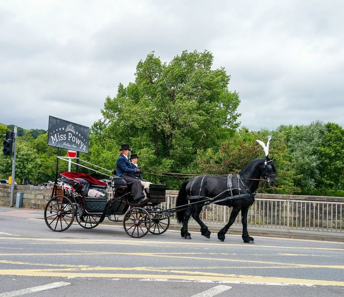 Horse Cart Transportation Tree Animal Themes Domestic Animals Road Mammal Riding Outdoors Cloud - Sky People Horse Cart Adults Only Adult Rural Scene Sky Day Bygone Times Wales Black Horse White Feathers Elegant Equine One Animal