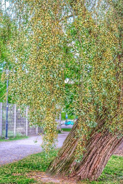 The Essence Of Summer Tree Summer Time  Summer Trees Summer2016 Colours Of Nature Finland Kupittaa Turku Turku In Finland