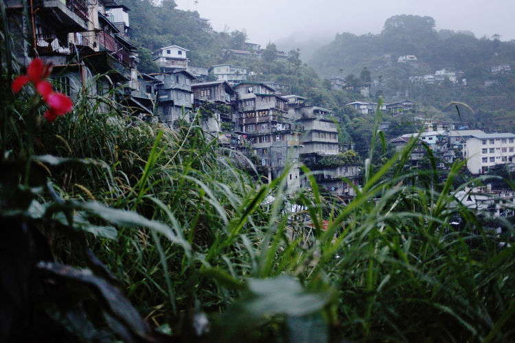 Built Structure Architecture Building Exterior Plant Building Nature Residential District Growth Tree Day House No People City Outdoors Selective Focus Green Color Grass Focus On Background Land Banaue Rice Terraces