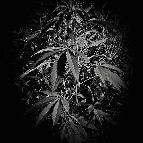 Close-up of plants at night
