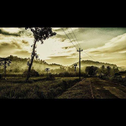 Kulon Progo Visitkulonprogo Visitkp Kp Kulonprogo Explorekp Exp Menoreh Morning Explorejogja JPMP Jpmpjogja Gold Yellow Sawah Jogja INDONESIA Landscape Mountain