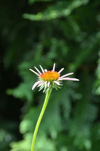 Minimalist Flower Single Flower Travel Summer Madison Wisconsin Henry Vilas Zoo