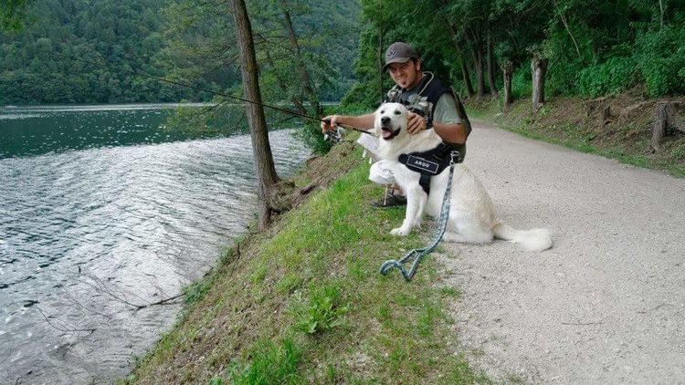 Dogslife Noitresempreinsieme Sempreingiro Semprevacanza Lagodilevico Natura