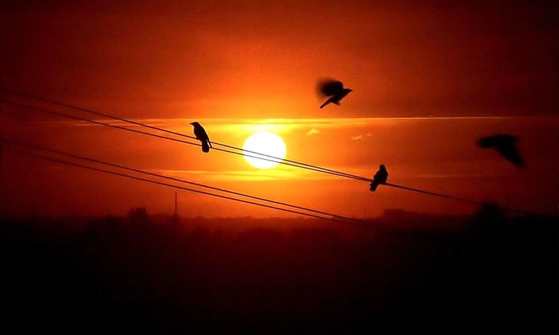 Birds On Wire Sunset Sunset #sun #clouds #skylovers #sky #nature #beautifulinnature #naturalbeauty #photography #landscape Flighing High Flighing Birds Check This Out Birds Of EyeEm