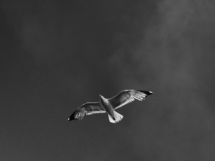 Seguimi Altro, Oltre Animal Photography Animal Themes Avian Beauty In Nature Bird Flying Freedom Looking Up Low Angle View Mid-air Mllml Motion Nature Nowayout Outdoors Seagull Spread Wings Wildlife Wings