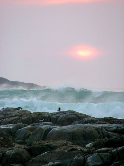 Hosta Beach Beauty In Nature Dramatic Majestic Nature Outer Hebrides Oyster Catcher Power In Nature Remote Rocks Scenics Scotland Sea Sun Sunset Wave Waves Crashing Waves, Ocean, Nature