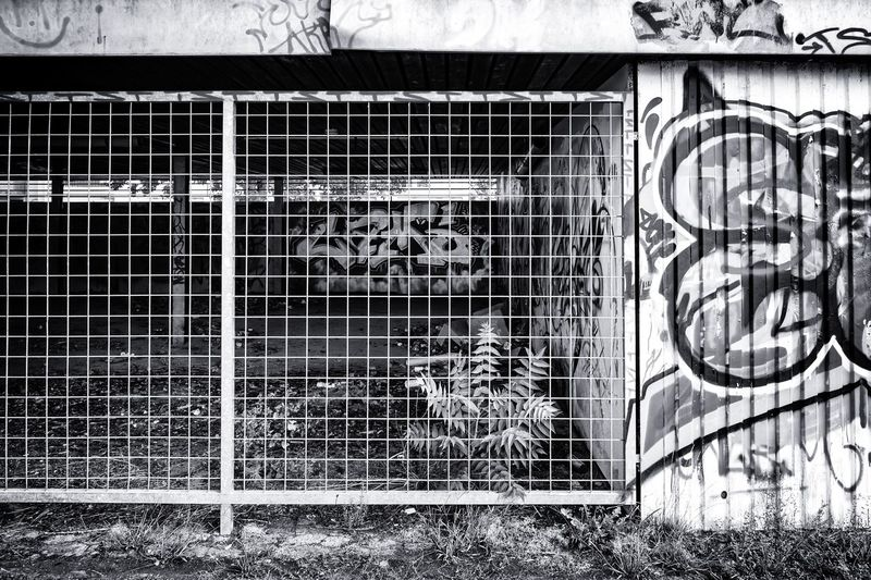 Urban Landscape Urban Perspectives The Devil's In The Detail Urban Photography Street Photography Black & White Monochrome Architectural Feature On The Way Building Exterior Metal Grate Architecture Close-up Graffiti Closed Architectural Detail Locked Spray Paint Architectural Design Architecture And Art
