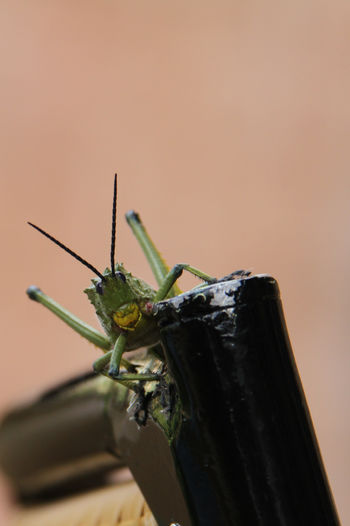 Looking into the eyes of a green grasshopper South Africa Nature Zoology Selective Focus Grasshopper Animal Wing Animal Body Part Animal Antenna No People Green Color Focus On Foreground Close-up Animal Wildlife Animals In The Wild One Animal Insect Animal Themes Animal