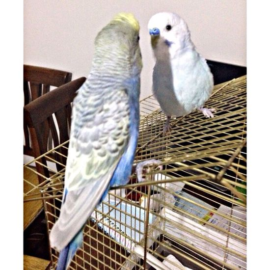 Birdlove Bird Photography Pet Photography  Taking Photos