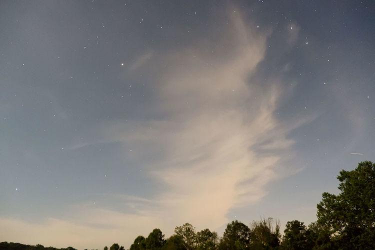 Sky Tree Beauty