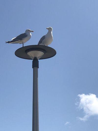 Seagull look